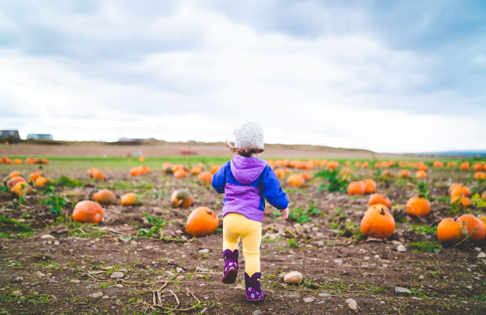 child running in a field of pumpkins