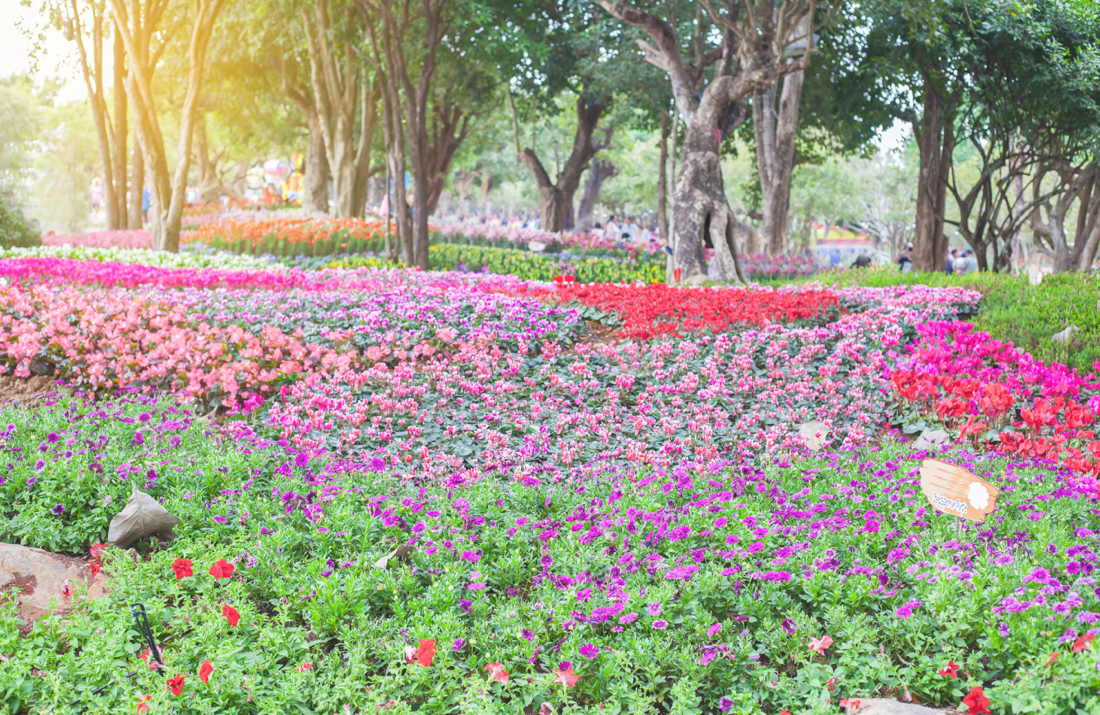 fields of pink, purple and red flowers at Bellevue Botanical Garden - Hyde Square Apts