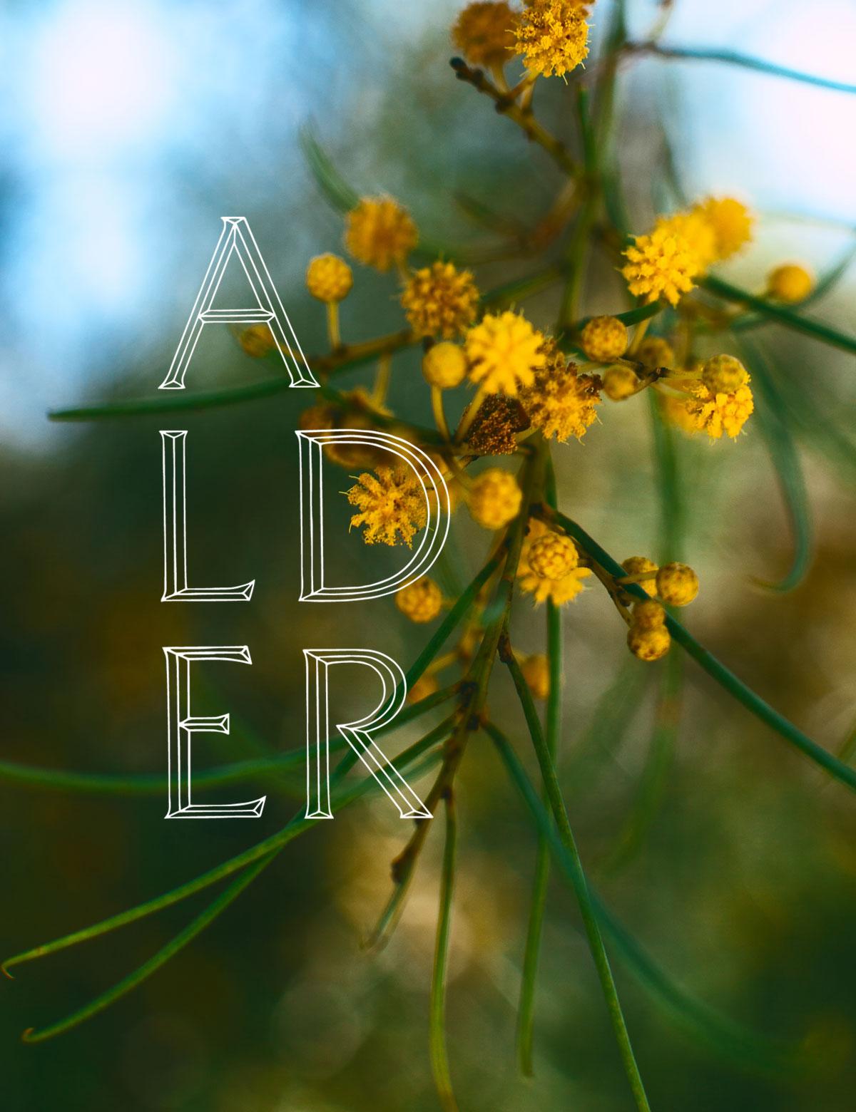 Alder Navigation - Flower