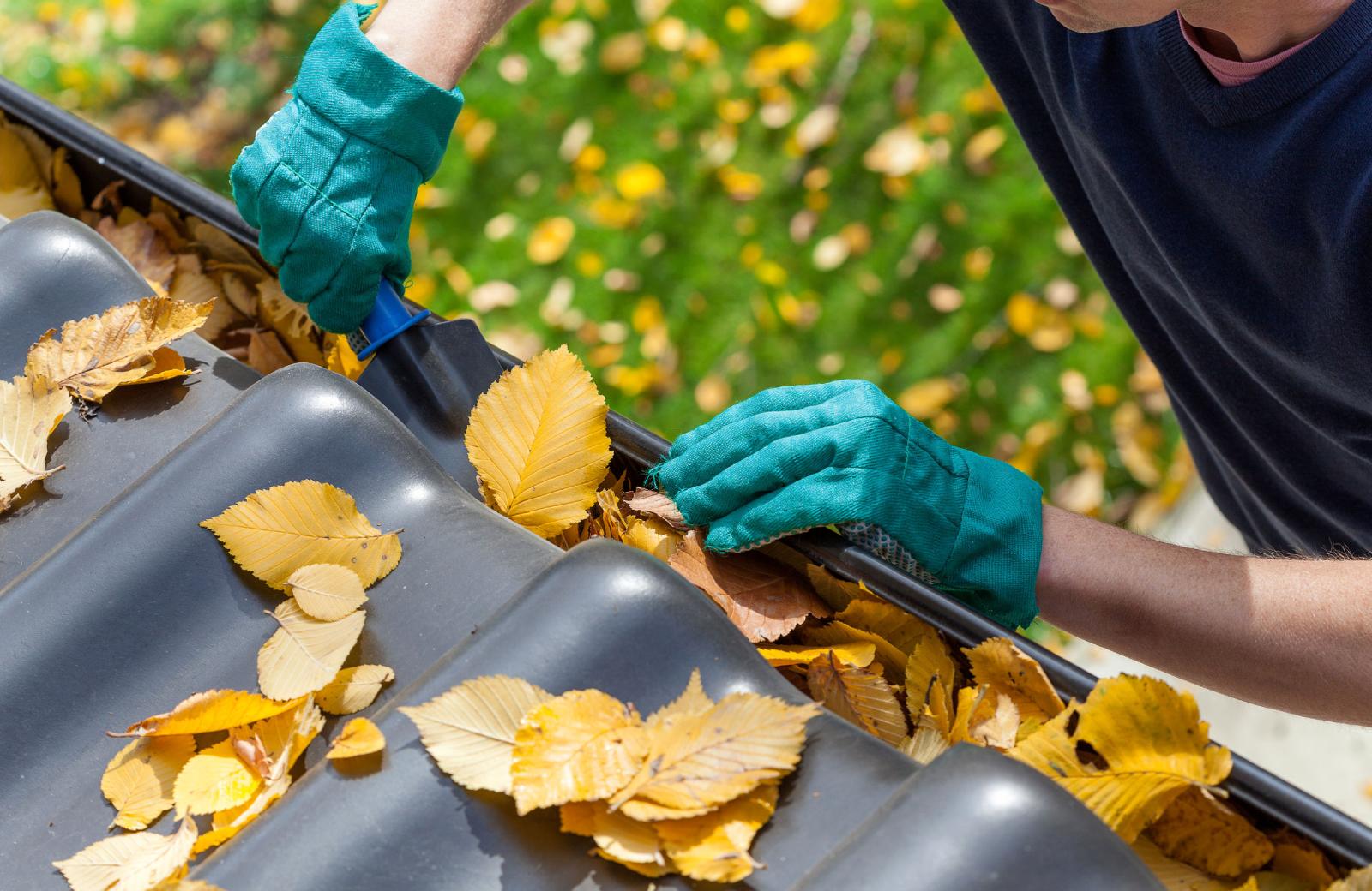 Fall Maintenance - Alder Apartments Northridge
