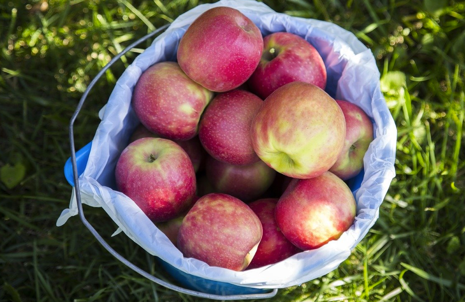 Fairfield County Apple-Picking Adventure - The Waypointe Apts