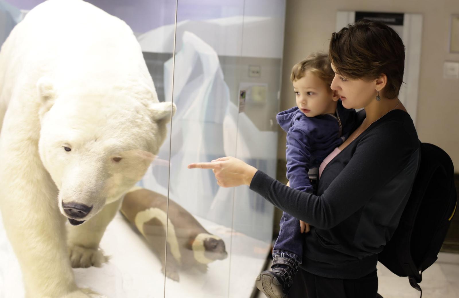 bear exhibit at the museum dtla