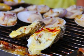 Oyster Festival Norwalk - The Waypointe Apts