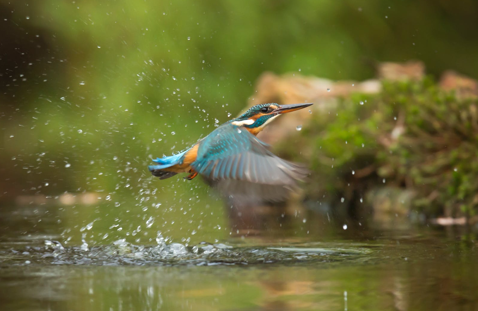 Visit the Connecticut Audubon Society