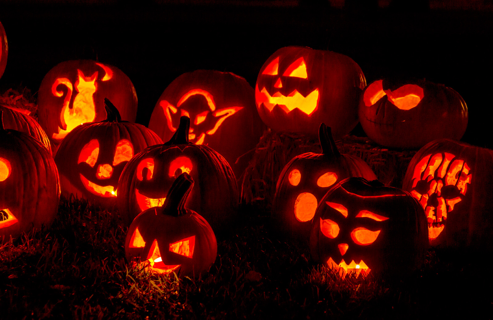 carved and lighted pumpkins for halloween arbors los angeles