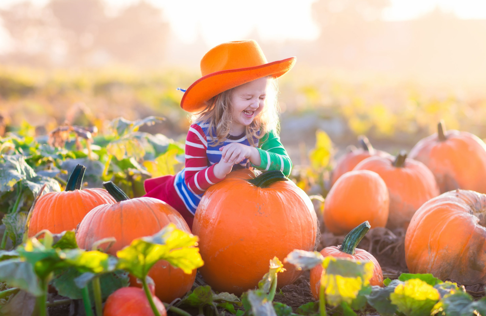 little girl in cowboy hat sitting on a large pumpkin kapilina hawaii