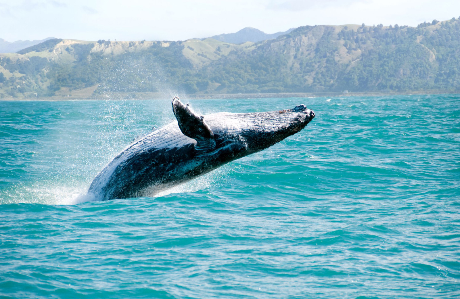 whale watching in oahu