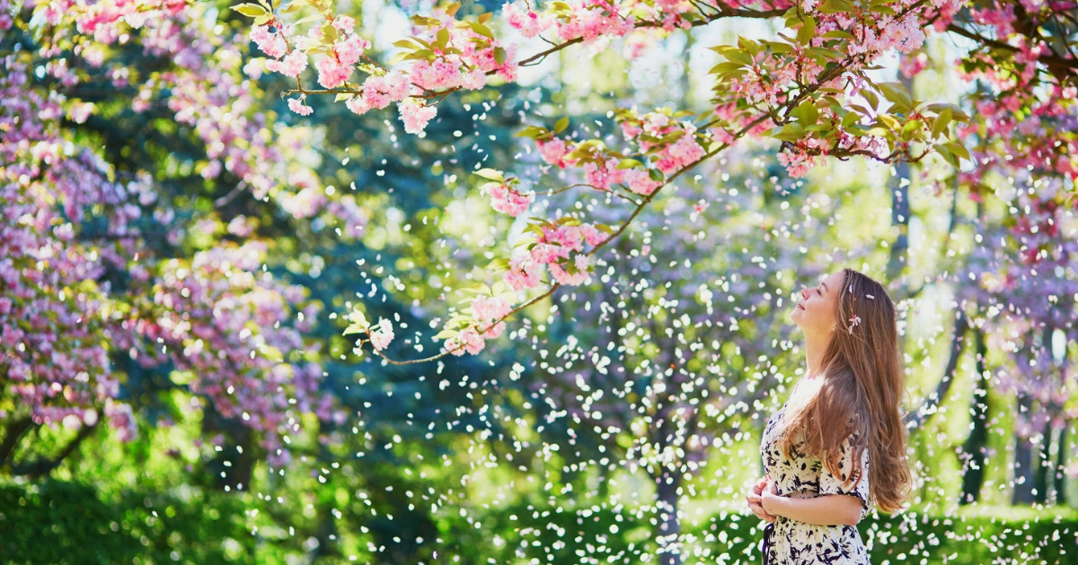woman admiring cherry blossoms
