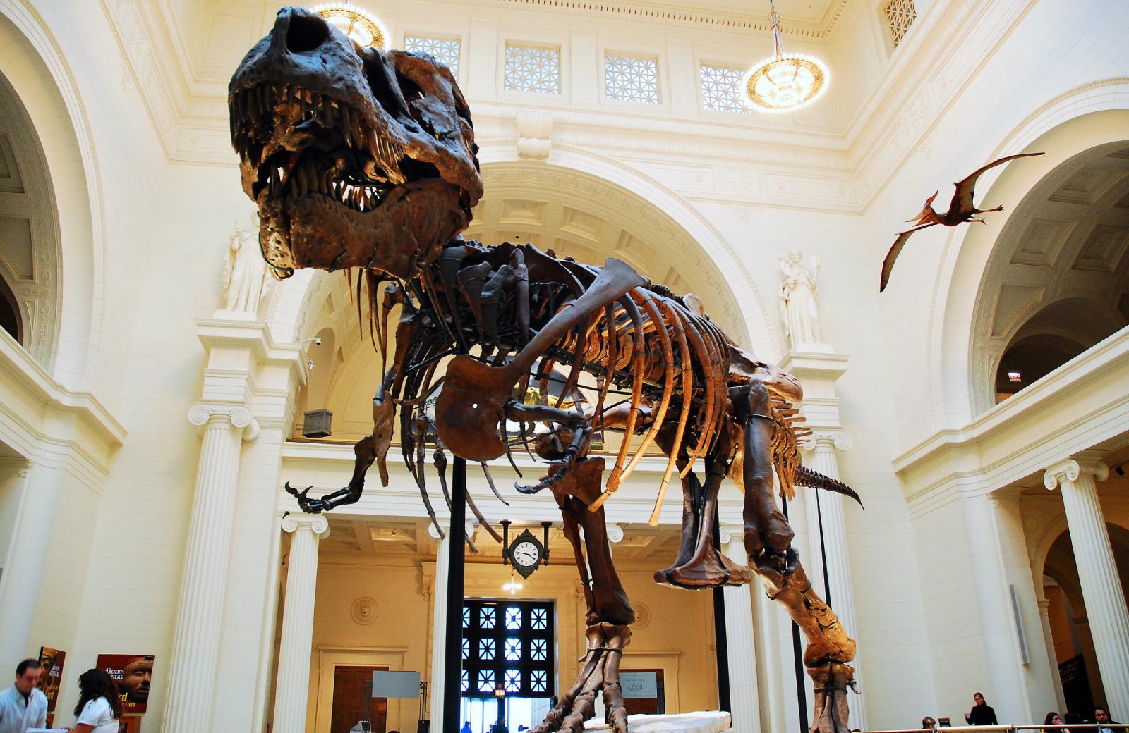 t-rex exhibit at the museum